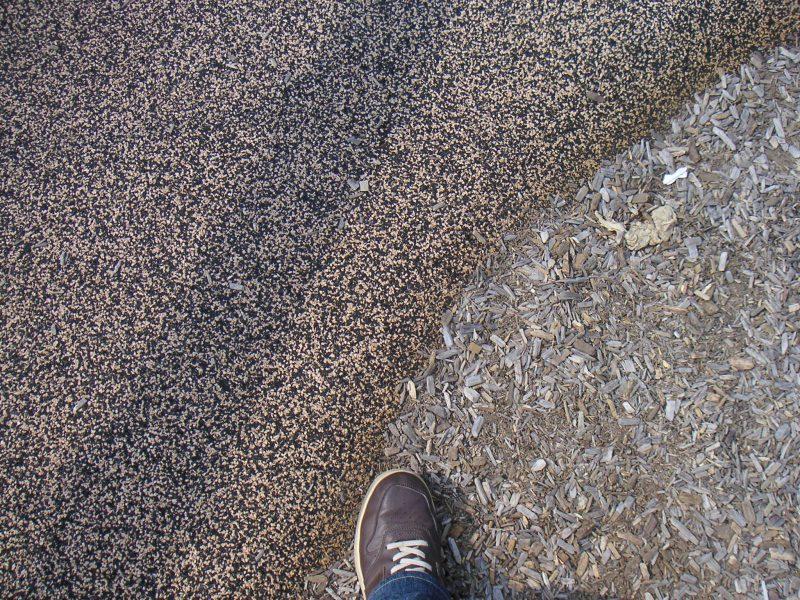 写真:ゴム舗装の通路とウッドチップのエリアの境界部分。撮影者の足も写っている