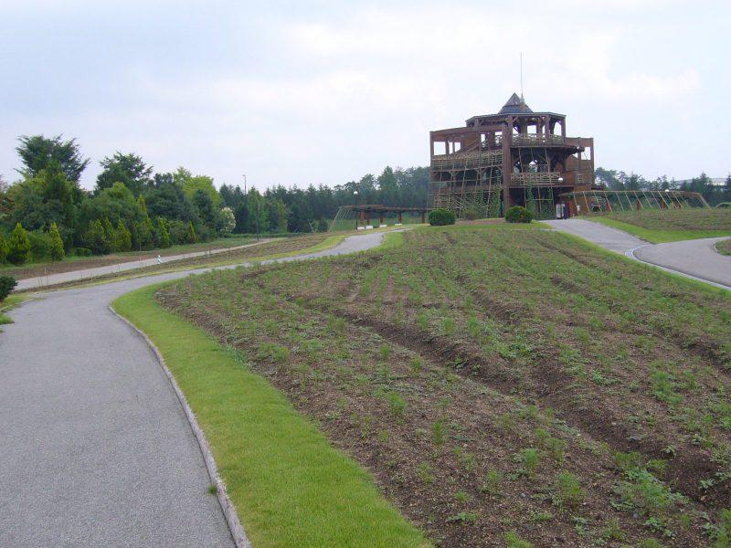 写真:芽を出して間もないコスモスの畑と木造の展望台