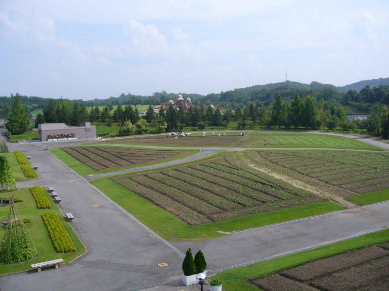 写真:展望台から見渡した広い畑と緑の山々