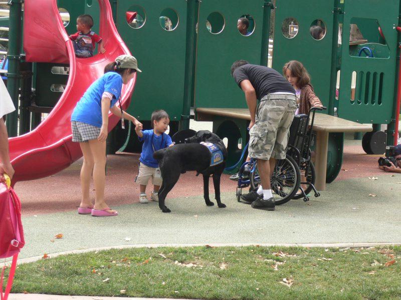 写真:コール君たちと、彼の介助犬黒いラブラドールに手を伸ばす小さな男の子