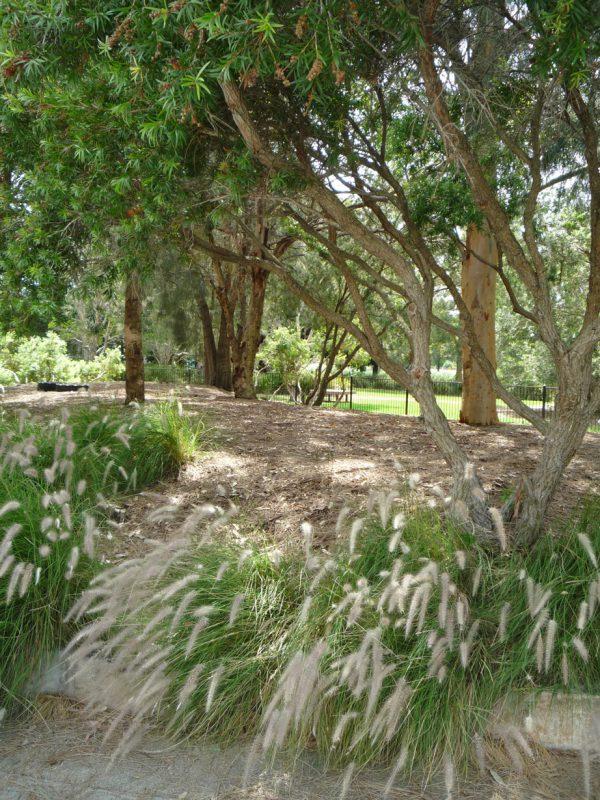 写真:木漏れ日が差し込む林