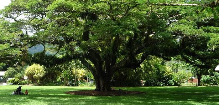 写真:遊び場の前の芝生広場にある大木。周囲に向かって広く水平に張り出した枝が大きな日陰をつくる。その木陰にベビーを置いて、傍らでくつろぐ親子