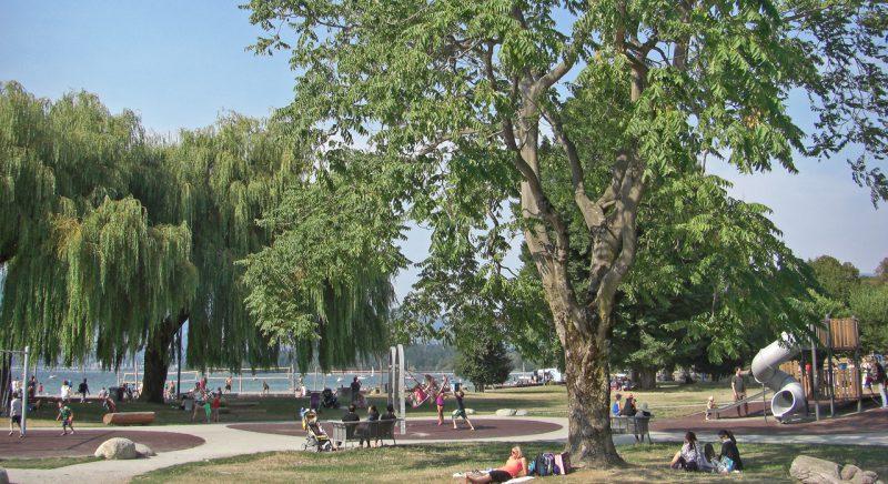 写真:大木の下の芝生エリアで子どもを見守りながらくつろぐ大人たち