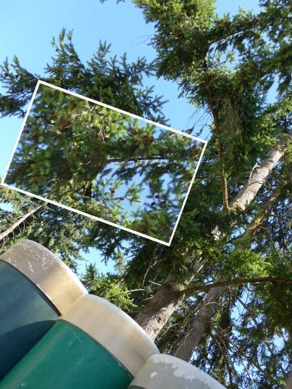 写真:近くの大木。枝に実がたわわについている