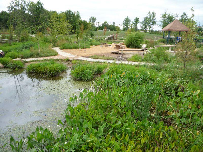 写真:水生植物の生い茂る池と池沿いを巡る歩道