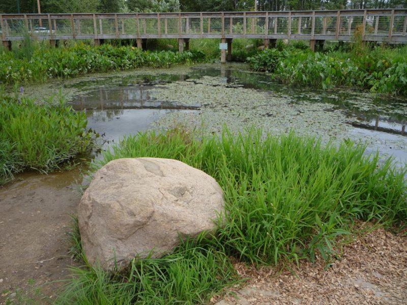 写真:水際から臨む池。岩や様々な水生植物が配されている
