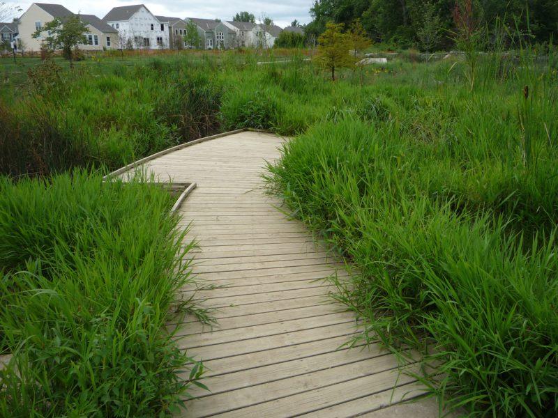 写真:葦などが生い茂り湿地のようになった部分に張り出したデッキ