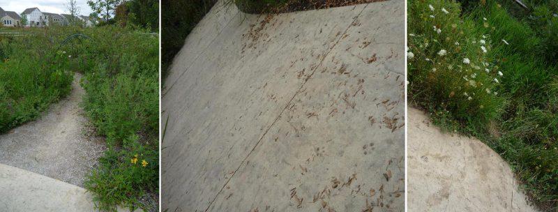 写真:舗装された歩道の脇にある小道。茂る草花や緑のアーチの中へと延びている