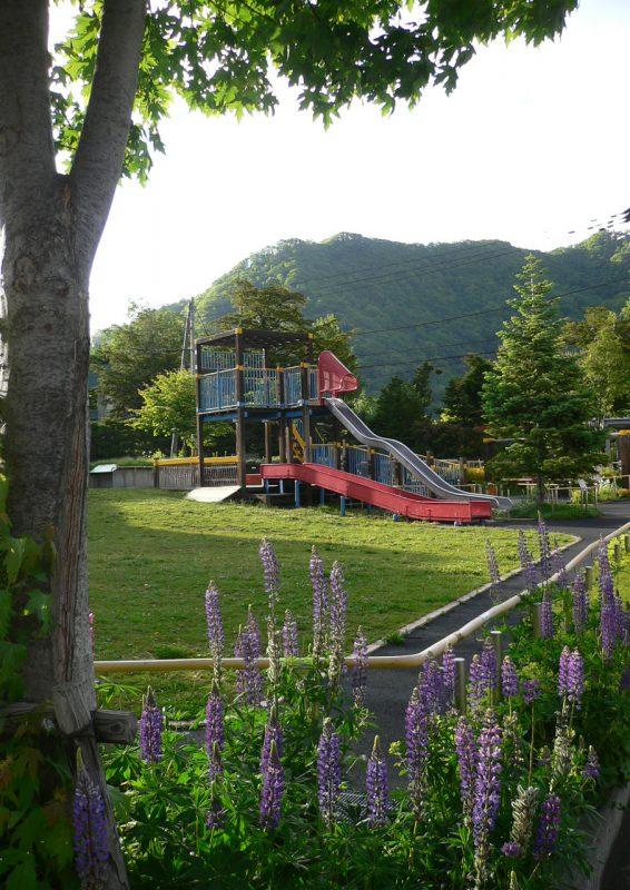 写真:むくどり公園。花壇に咲くルピナスの花と緑の芝生広場の向こうに、西日に照らし出された複合遊具