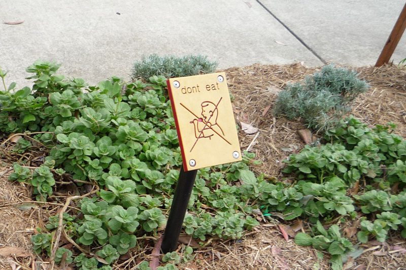 写真:同じくハーブガーデンのパネル。Don't eatの文字と、口元にスプーンを運ぶ男の子の姿に大きくバツ印が書かれた絵。黄色いパネルに赤い溝で示されている