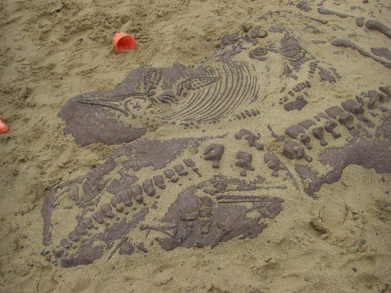 写真:砂の中に埋もれている大きな化石