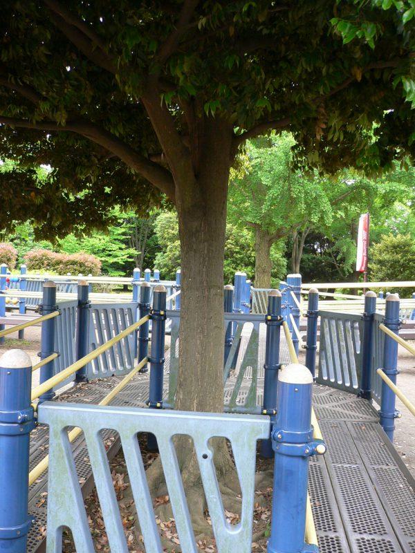 写真:2本並んだスロープの間に大きな常緑樹