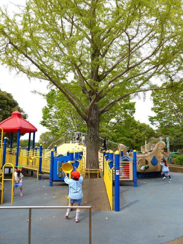 写真:スロープの上り口。正面のデッキに大木