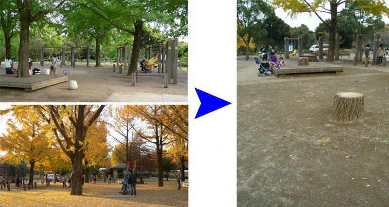 写真:ビフォア:木陰や紅葉を楽しめる見事な大木。アフター:あちこちに切り株が並ぶ