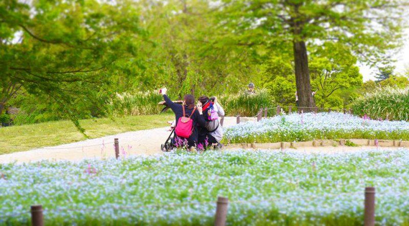 写真:ネモフィラの花畑をバックに、ベビーカーの両脇にしゃがんで写真を撮る母と祖母と子