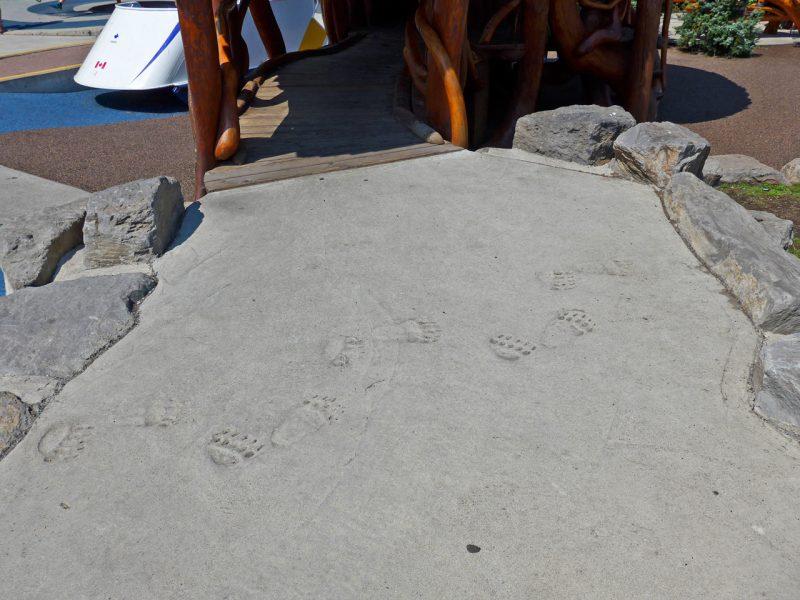 写真:コンクリートの園路に付けられたクマの足跡。実際にクマが出没する地域だけあってリアル
