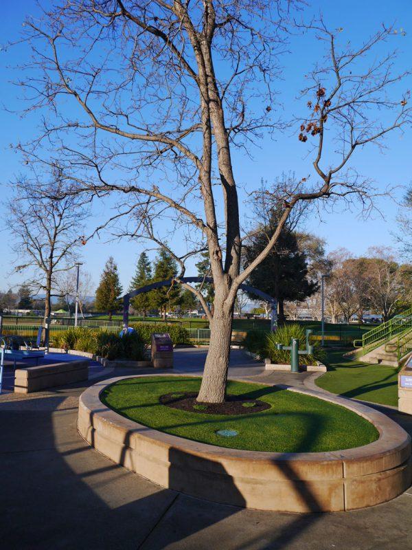 写真:1本の木を抱く楕円形のレイズド花壇。その回りに環状園路